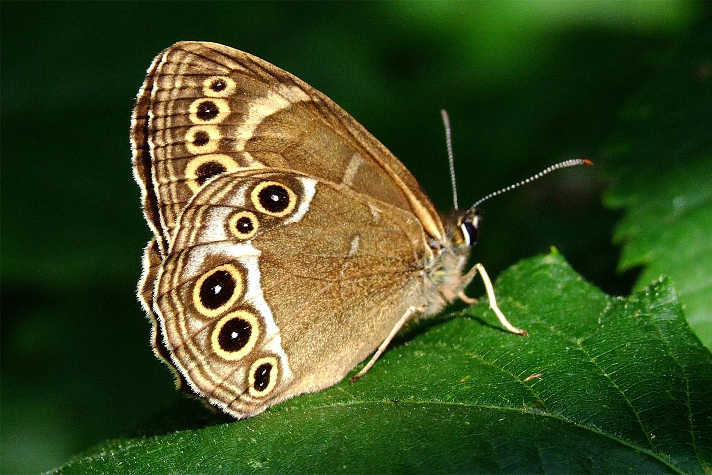 Schmetterling datiert